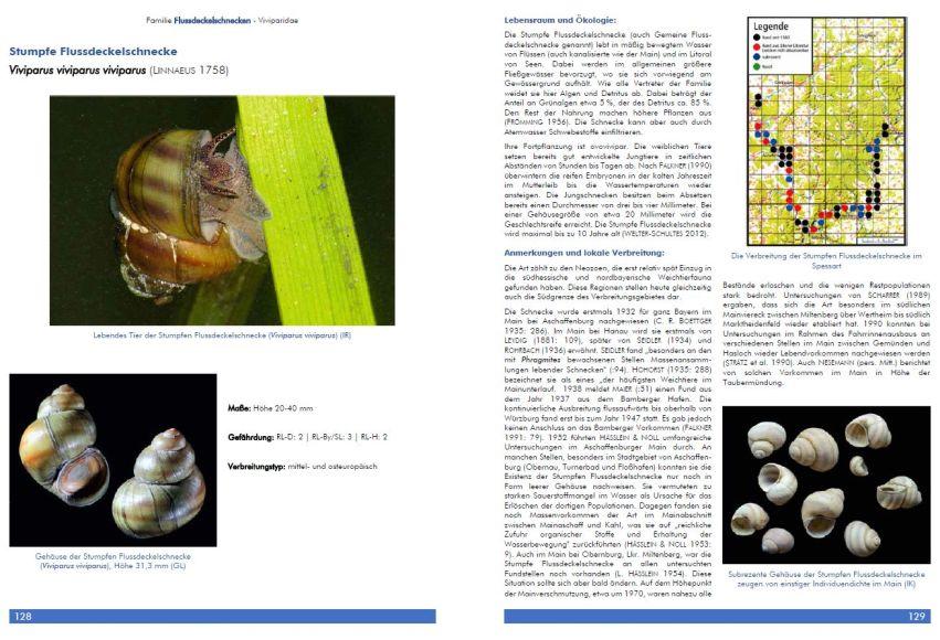 Band 30 S128 129 Buchneuerscheinung: Die Weichtiere des Spessarts und des angrenzenden Mains