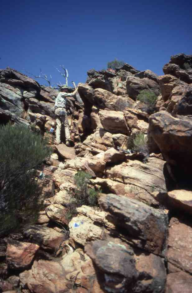 Flinders Ranges 15.10.1982